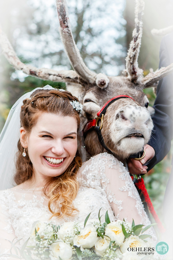A posed photograph of the bride with a reindear smiling over her left shoulder.