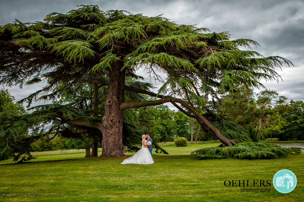 bride and groom under a huge cedar tree at Stubton Hall