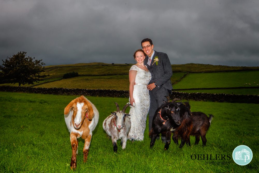 Bride and Groom feeding the goats