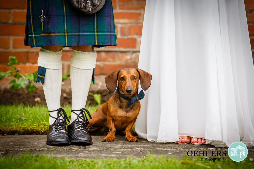 Low angle photograph of a suasage dog dressed up in a bow tie in between bride and groom.