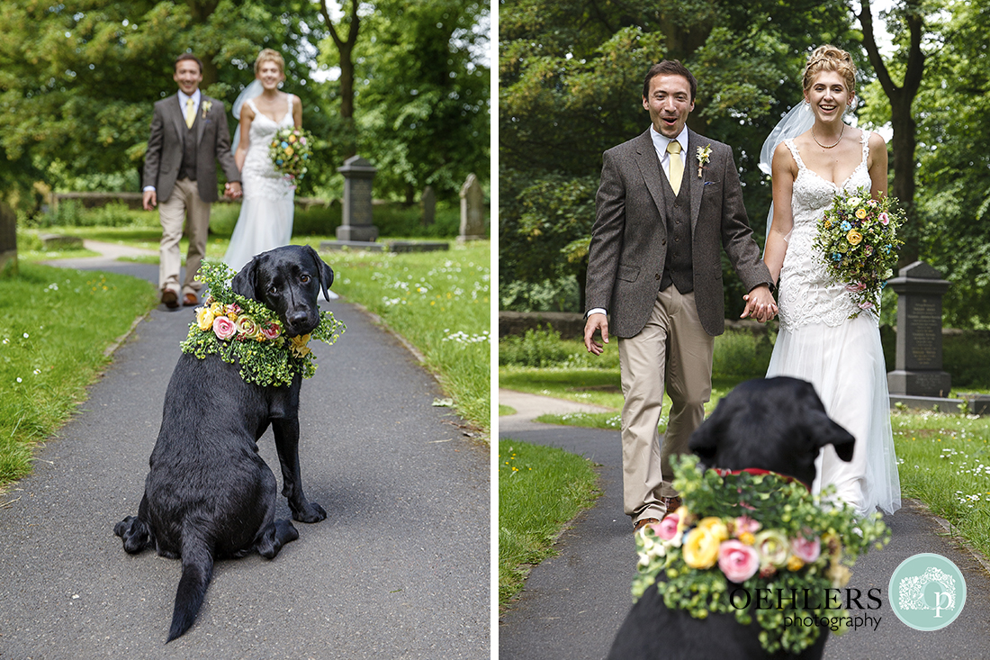 Pet dog greets the Bride and Groom